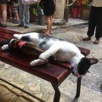 Havana Club cat