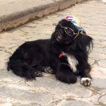 Cuban pup